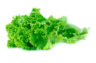 Gentilina lettuce